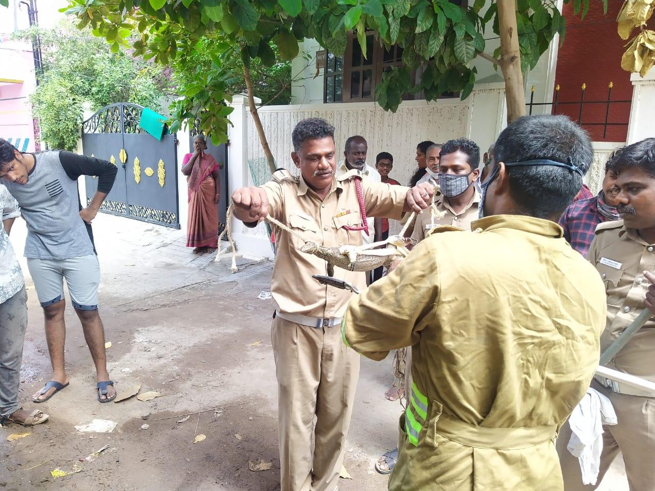 வீட்டுக்குள் புகுந்த உடும்பு : பிடித்த தீயணைப்புத் துறையினர்.!