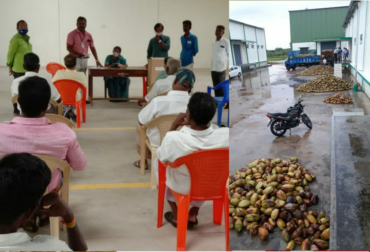 விவசாயிகளிடமிருந்து ரூ 2.9 லட்சத்திற்கு தேங்காய் நேரடி ஏலம்.!