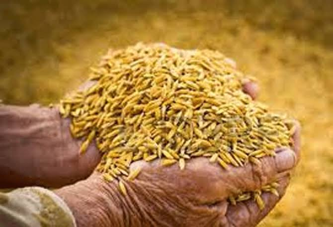 2020-21 காரீப் நெல் கொள்முதல் கடந்த ஆண்டை விட 19.92 % அதிகம்