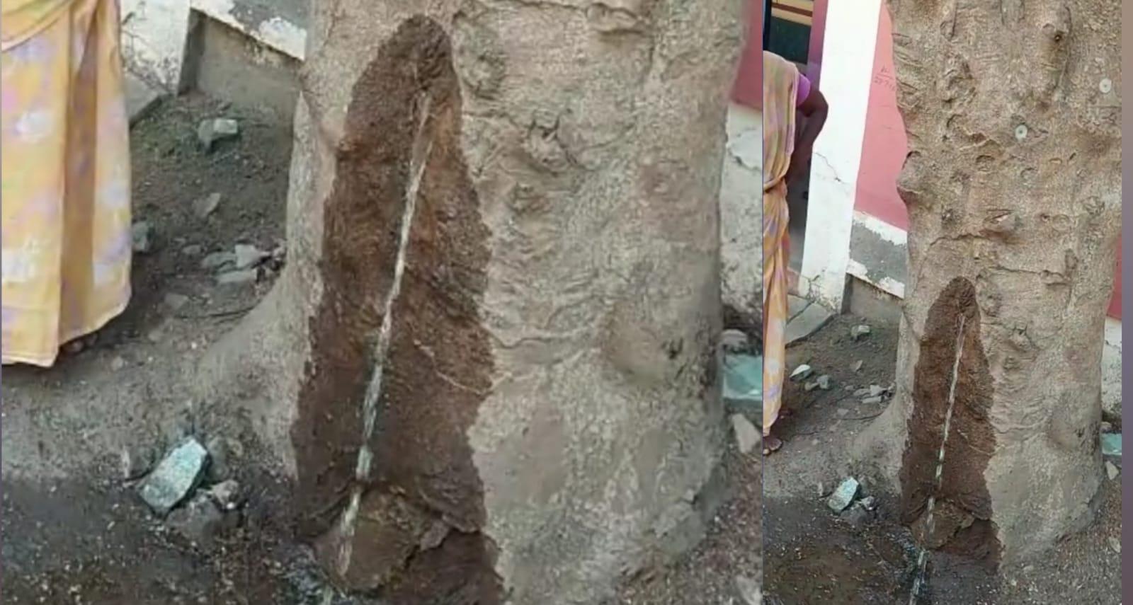 மரத்திலிருந்து திடீர் தண்ணீர் : ஆச்சரியத்துடன் பார்த்துச் சென்ற பொதுமக்கள்